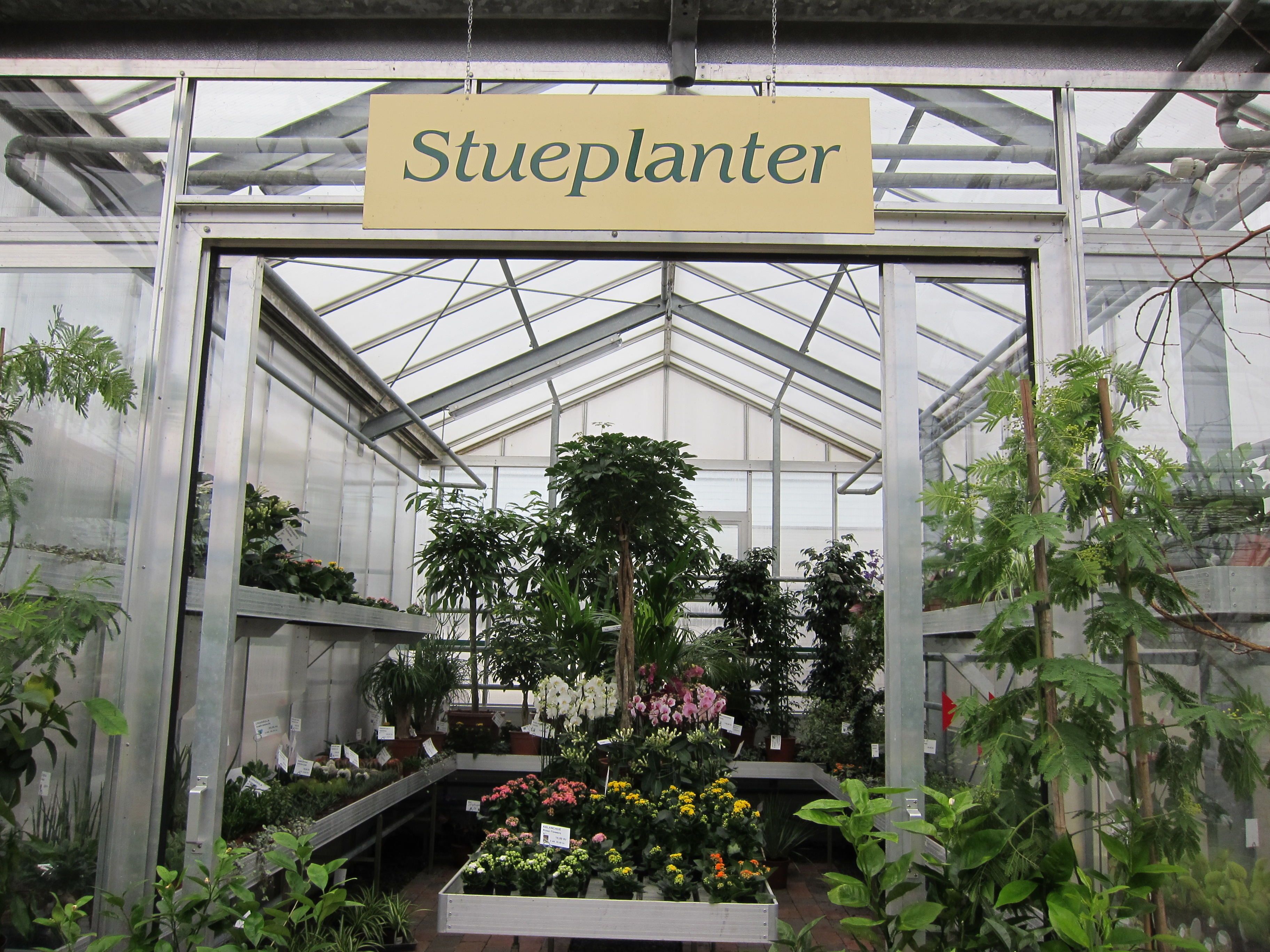 Stueplanter - Gartneriet Lillienlund